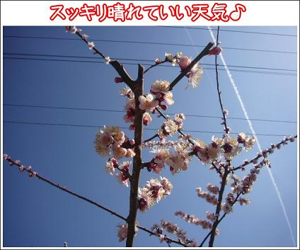 良い天気の梅林日和♪