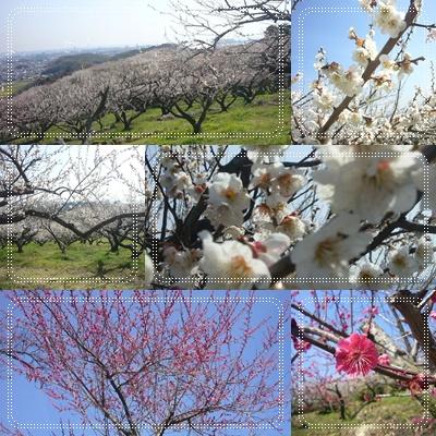 梅の花花♪