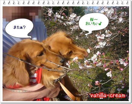 桜うまい!
