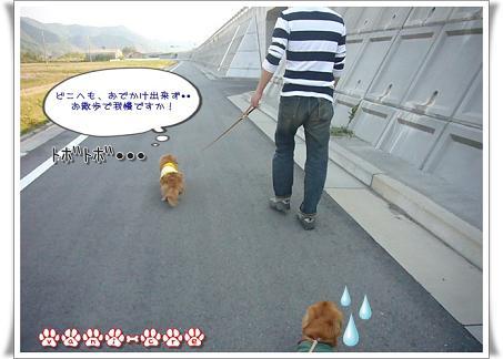 散歩か..