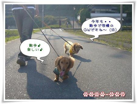 散歩で我慢!