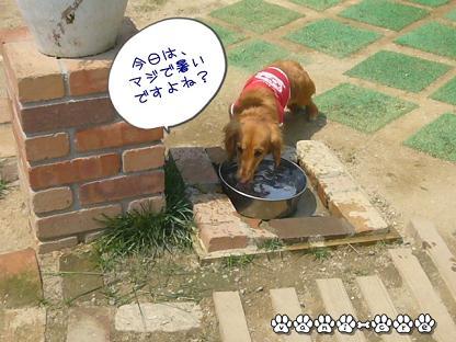 水飲みバニラ♪