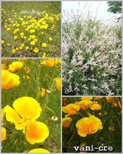 風車村の花
