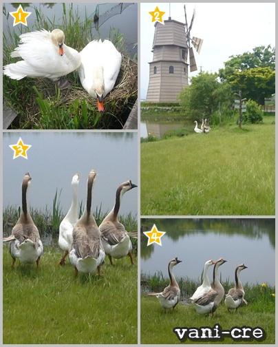 風車村(鳥♪)