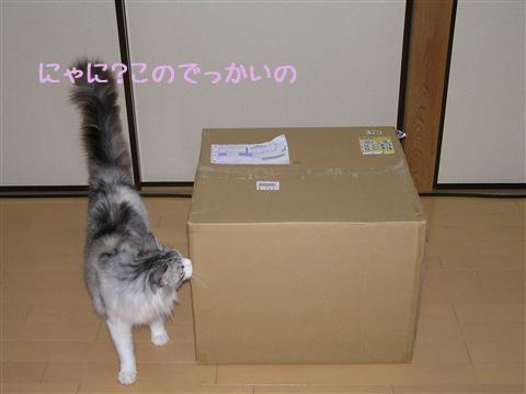 大きい箱!