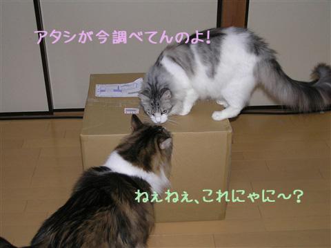 野次猫その①登場~