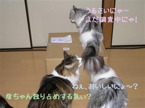 野次猫その②も登場~