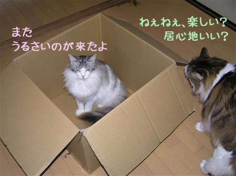 またまた野次猫1号
