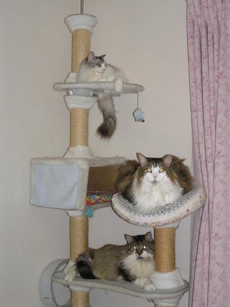 猫の成る木?