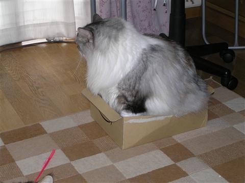 思う壺じゃなくて箱に入るはりしょん
