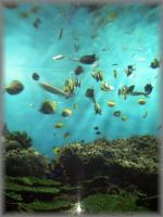 テーマは「沖縄の海」