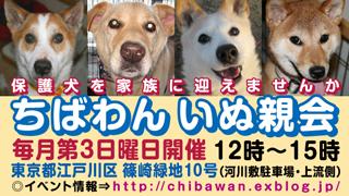teiki_inuoyakai320x180.jpg