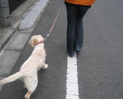 ルイお散歩