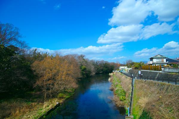 柿田橋から上流方向