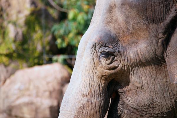 象の目は優しい