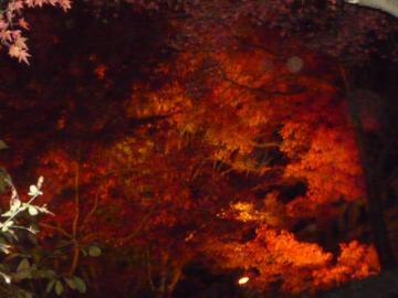 京都 036