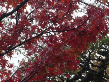 京都 079