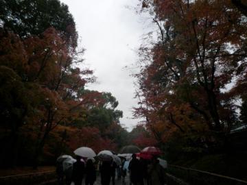京都 084