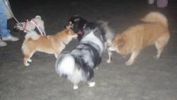 友達と遊ぶウィル