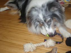おもちゃで遊ぶウィル