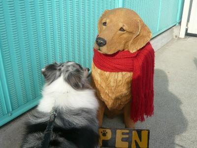 看板犬に挨拶