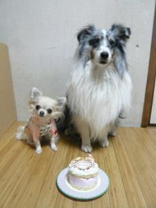 ケーキだぁよ