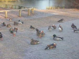 水鳥が陸鳥に