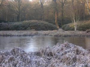 池が凍っているので