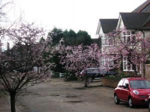 街角の桜2