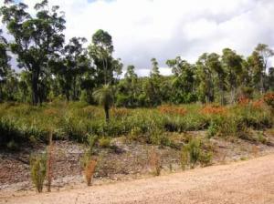 土の道の横の草