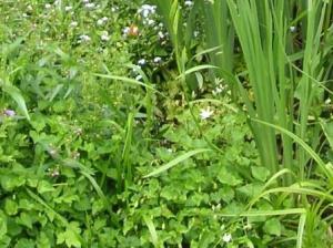 雑草いっぱいあるよ