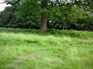 green at Richmond Park