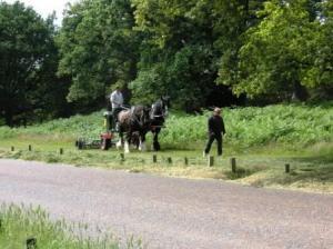 馬で芝刈り