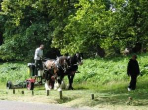 馬で芝刈り近影