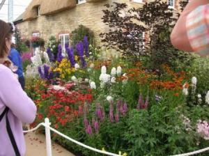 裏庭には花がぎっしり