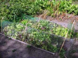 野菜の上にネット