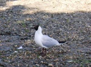 それを見ているマスカレード途上の鳥?