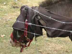 冗談かと思った馬のマント