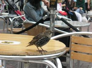 鳥が強引にやってくる