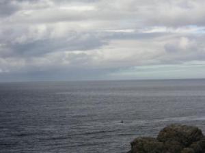 暗い海に何かがポチリと