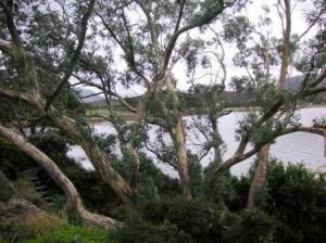 迷彩服の木。