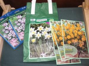 オキザリス、早咲き水仙、ゴールデンベル
