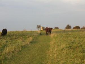 牛がいてこちらを見ている