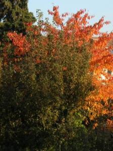 近くの家の庭が紅葉