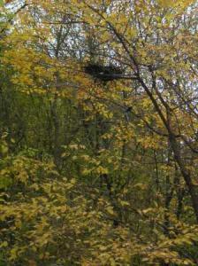 黄葉・鳥の巣つき