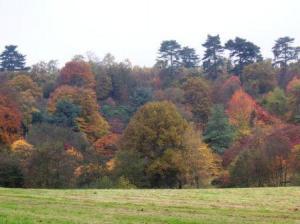 紅葉の森の遠景
