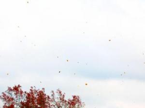 落ち葉が舞い散る