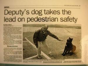 犬が引っ張って動こうとしない。