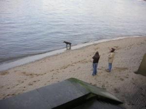 砂浜で犬が今から水に入る所。