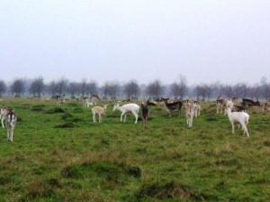 茶色い鹿、白い鹿、黒っぽい鹿